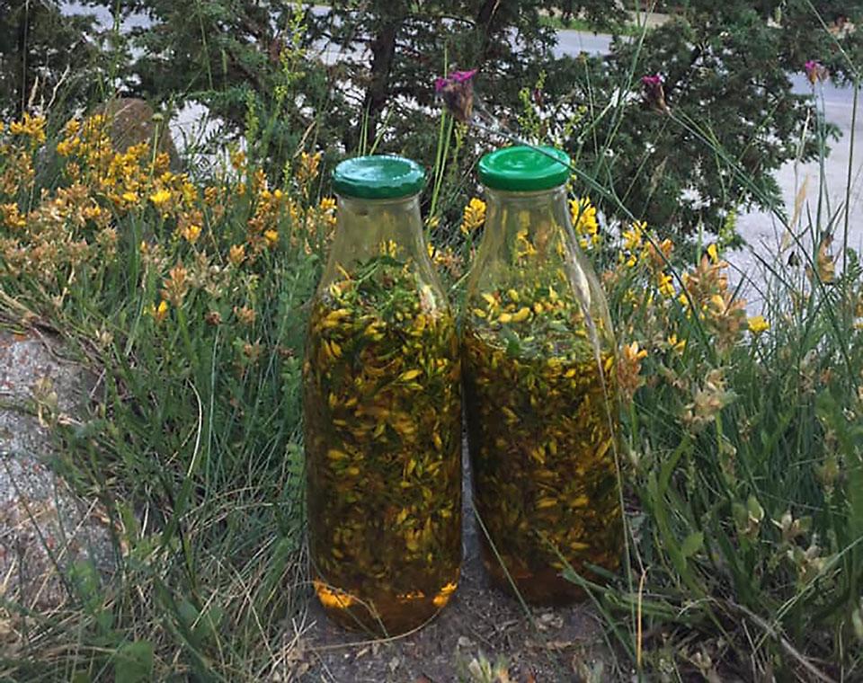 aromalumiere-plantes